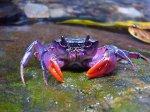 Lisa Frank Crab